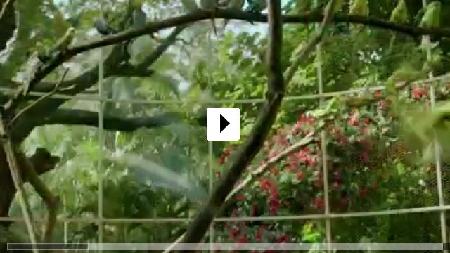 Zum Video: Life of Pi: Schiffbruch mit Tiger