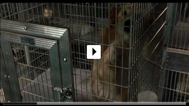 Zum Video: Paulie - Ein Plappermaul macht seinen Weg