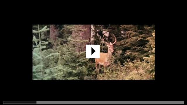 Zum Video: Die durch die H�lle gehen
