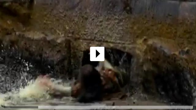 Zum Video: Schneewittchen und der J�ger