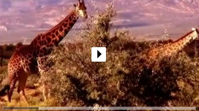 Zum Video: When the Cobra Strikes