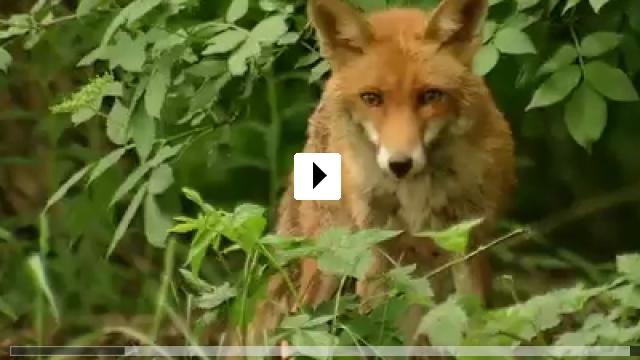 Zum Video: Unser Wald - Das grüne Wunder