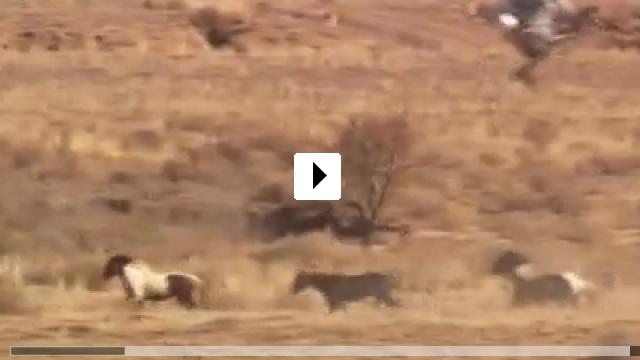 Zum Video: Wild Horse, Wild Ride