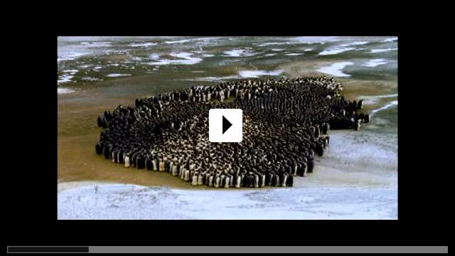 Zum Video: Die Reise der Pinguine