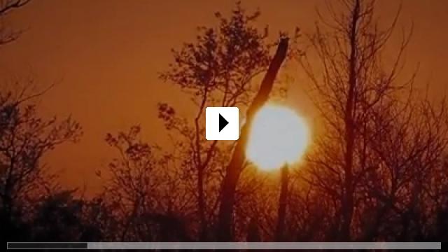 Zum Video: Brawler