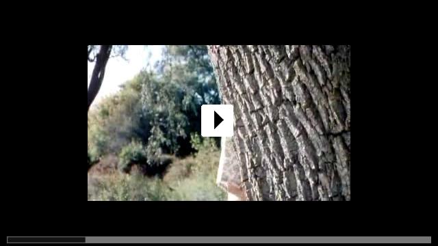 Zum Video: Saint Ralph