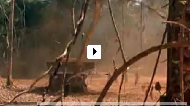 Zum Video: Der Smaragdwald