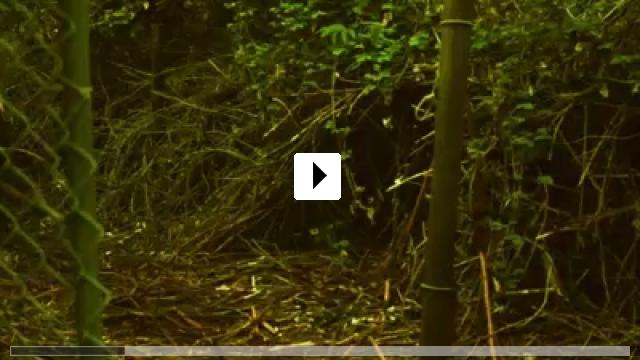 Zum Video: From Beneath