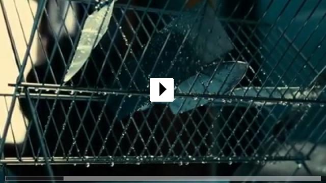 Zum Video: The Blind Man