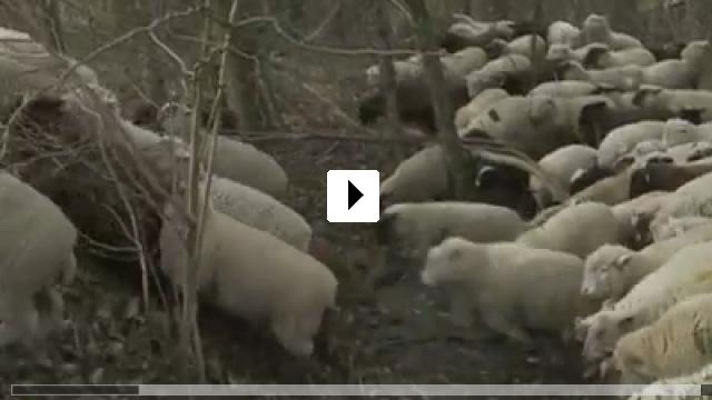 Zum Video: Winternomaden