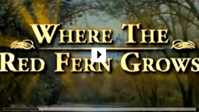 Zum Video: Wo der rote Farn wächst