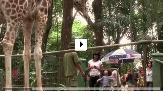 Zum Video: Die Nacht der Giraffe
