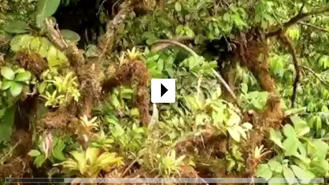 Zum Video: Weltnaturerbe Costa Rica