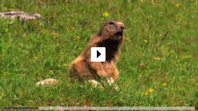 Zum Video: Wildes Bayern