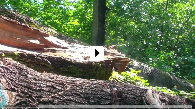 Zum Video: Slow - Langsam ist das neue Schnell - Ein Schnecken-Tag