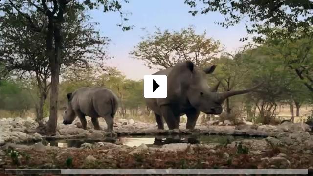 Zum Video: African Safari 3D