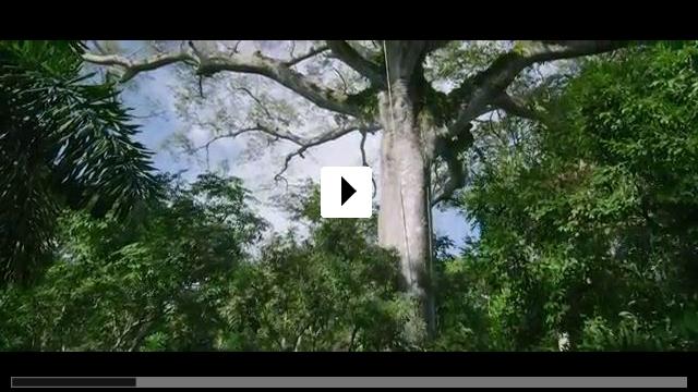 Zum Video: Das Geheimnis der Bäume