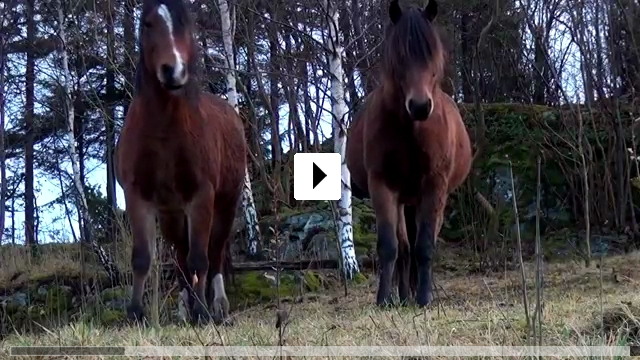 Zum Video: Norwegen 3D