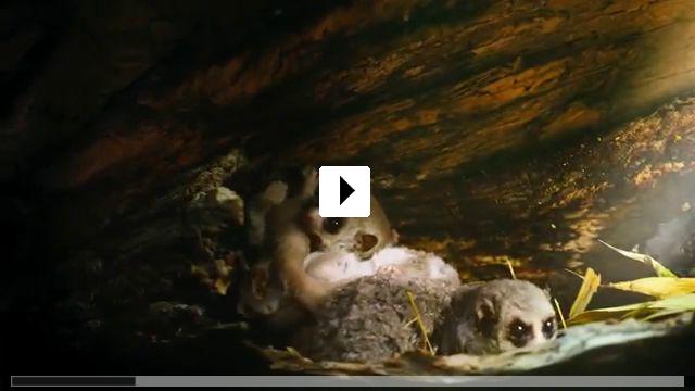Zum Video: Island of Lemurs: Madagascar