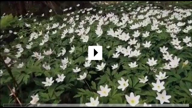 Zum Video: Wunder des Waldes