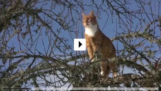 Zum Video: Albert - Der unsichtbare Hund