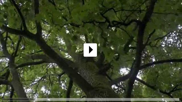 Zum Video: Blind