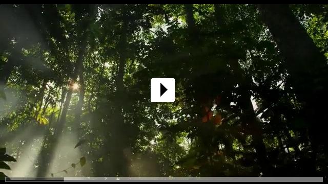 Zum Video: Amazonia - Abenteuer im Regenwald