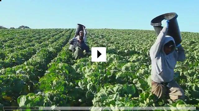 Zum Video: Food Chains