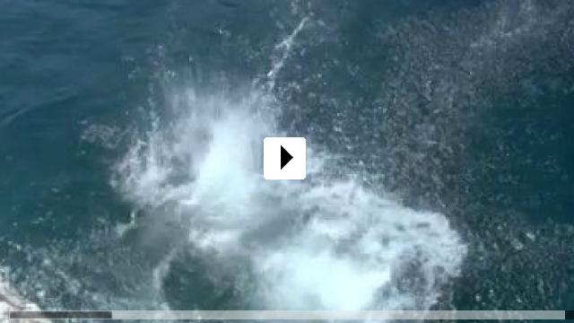 Zum Video: Die Falschmünzer