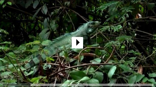 Zum Video: Amazonas 3D - Im Herz der wilden Natur