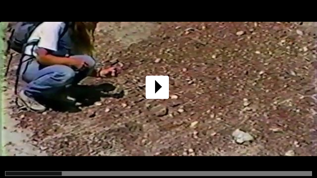 Zum Video: Dinosaur 13