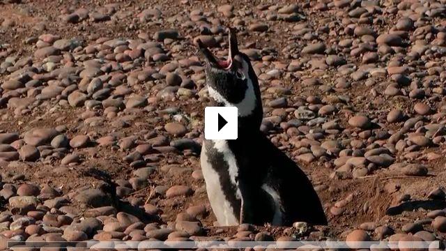 Zum Video: Unsere Erde, unsere Meere