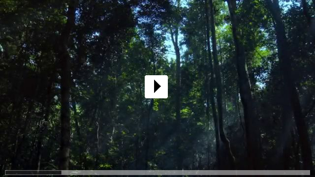Zum Video: Song from the Forest