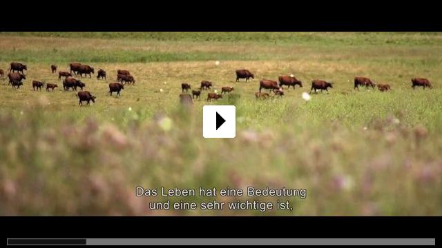 Zum Video: Viel Gutes erwartet uns