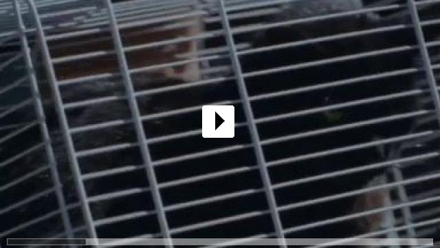 Zum Video: Missverstanden