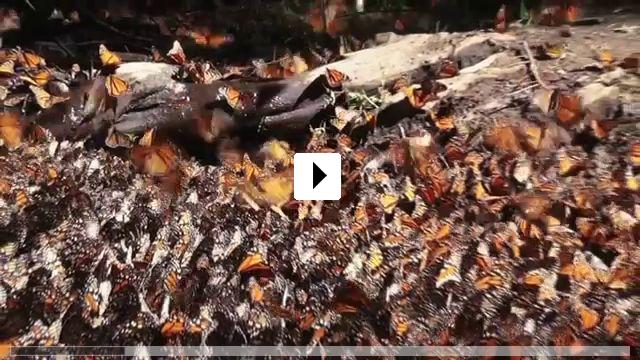 Zum Video: Die fantastische Reise der Schmetterlinge 3D