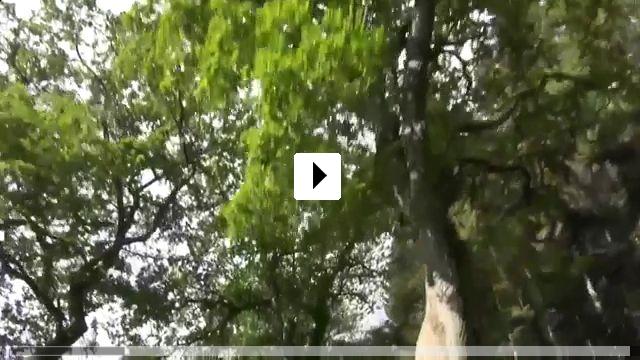 Zum Video: Zeige deine Wunde - Kunst und Spiritualität bei Joseph Beuys