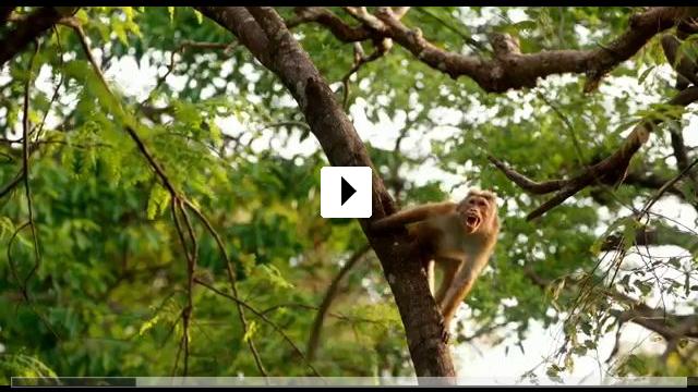 Zum Video: Im Reich der Affen