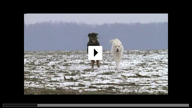 Zum Video: Jagdhunde
