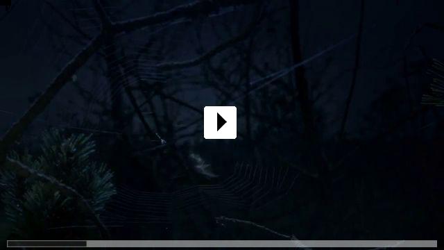 Zum Video: Magie der Moore