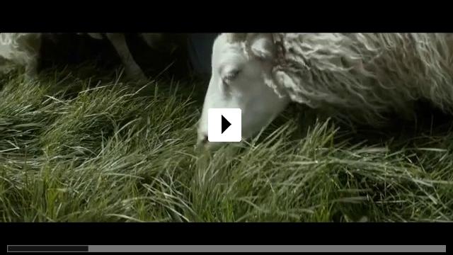 Zum Video: Sture Böcke