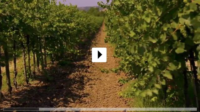 Zum Video: SOMM: Into the Bottle