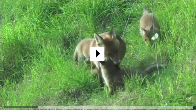 Zum Video: Im Namen der Tiere