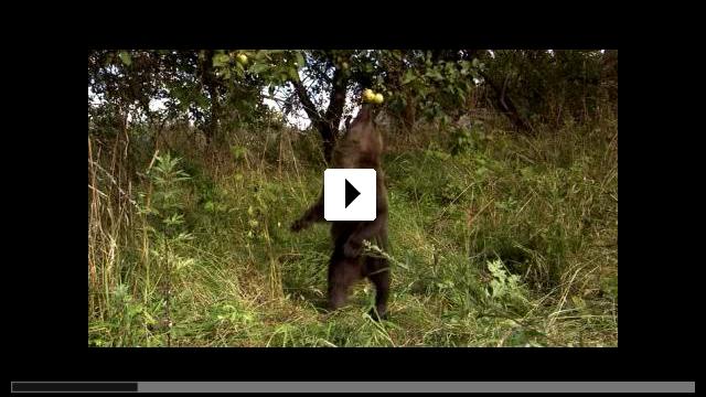 Zum Video: Knut und seine Freunde