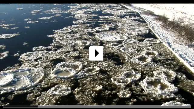 Zum Video: Holunderblüte