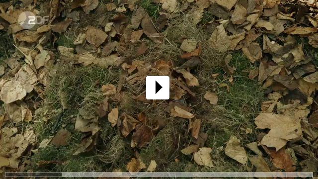 Zum Video: Letzte Spur Berlin