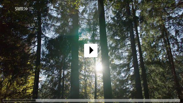 Zum Video: Königin der Nacht