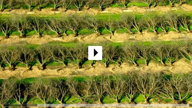 Zum Video: Terra