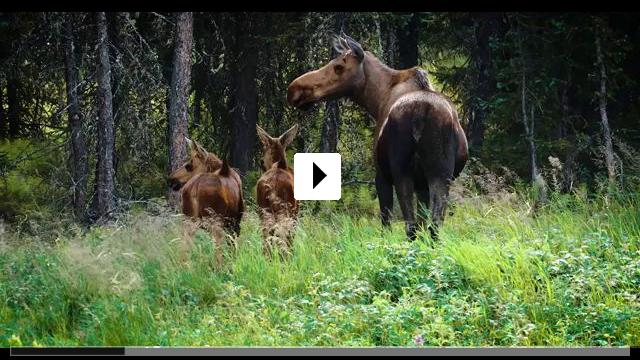 Zum Video: Expedition Happiness