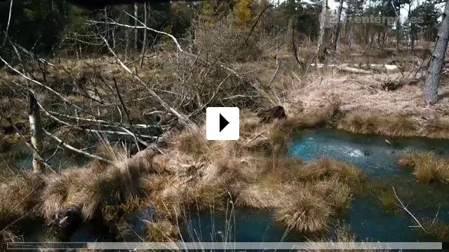 Zum Video: Das Mädchen aus dem Totenmoor